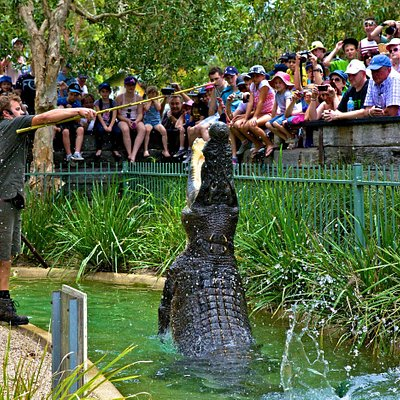Have lunch with Elvis the crocodile