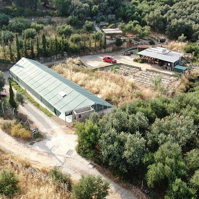 The snail farm pictured by Rico's drone
