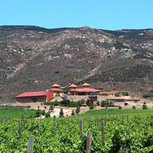 Esta es una foto de nuestra vinicola.