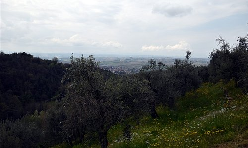 Looking down the Strada Verde towards Vinci