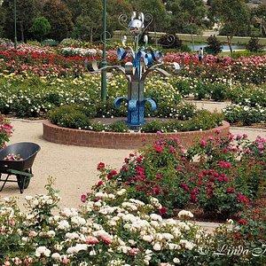 Mornington Botanical Rose Garden