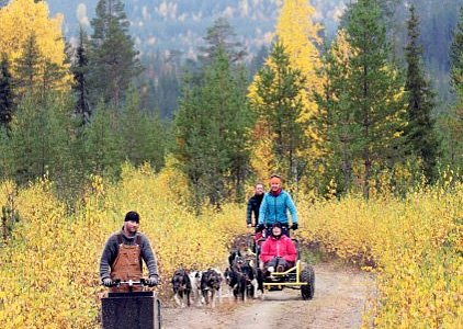 Husky cart tour in the autumn.