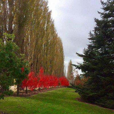 Autumn at Bannerman Park.