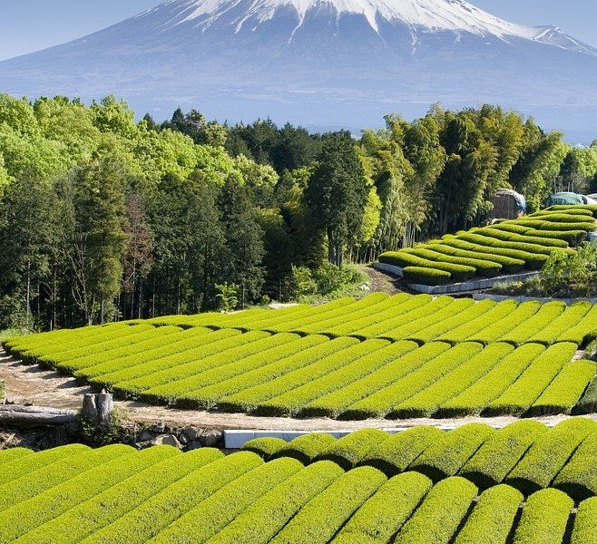 If you love green tea, then you will adore Shizuoka!  Shizuoka Prefecture produces the largest amount of tea in Japan and some of the fields even boast picture-perfect views of Mount Fuji! Besides drinking matcha green tea, you can also try it in all kinds of sweets and snacks.