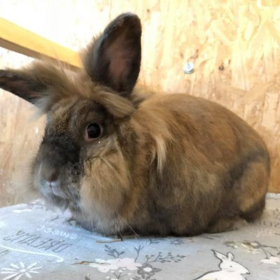 One of the rescue rabbits at Thornberry Animal Sanctuary