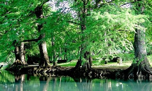 The beautiful banks of the San Marcos River.