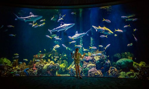 Immerse yourself at Wonders of Wildlife National Museum and Aquarium