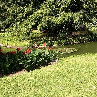 Kleiner Teich mit Seerosen.