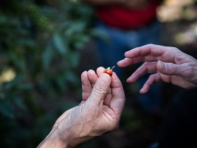 Working with small-holder coffee farmers around Guatemala.