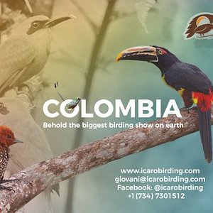 Icaro Birding tours to Colombia organizes beautiful, flawless, well-thought tours to Colombia, the country with more bird species on earth.