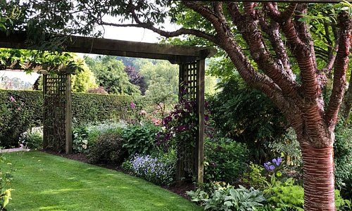 Meadow Farm Garden  - Arbour with Prunus serrulata