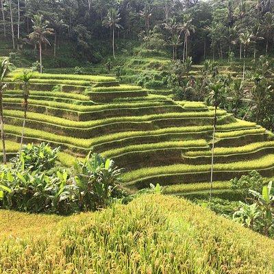 Bali Ancient Tour - Cekingan Terasering