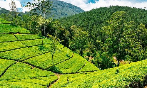 Kandy, Dambulla, Sigiriya, Nuwara eliya - 4 day tour in Sri Lanka