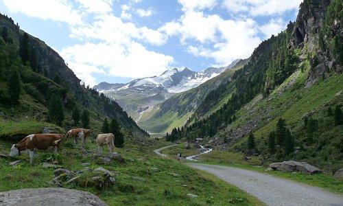 Verso lo Zittauer Hütte (2.328 m) nei pressi dellaTriss Alm (1583 m) nella zona di Gerlos in Austria