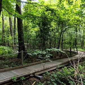 Frog Pond Trail at Broad Meadow Brook Wildlife Sanctuary, Worcester, MA