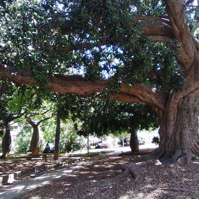 El sector meridional acapara la vegetación arbórea.