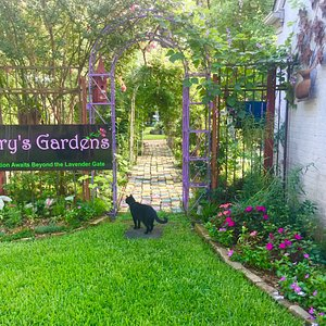 """Simon Kitty is considering that """"Inspiration Awaits Beyond the Lavender Gate!"""""""