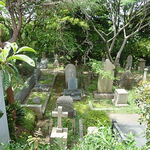 墓地、草生え放題