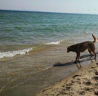 Playa cristalina para perros