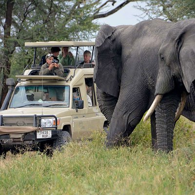 If you are planning for a small summer vacation to Tanzania, and still you feel confused about selecting the right tour package. Then surprise! You have reached the perfect place. Here you can plan your vacation trip to Tanzania as per your budget. If you are searching for a comfortable and price friendly safari trip to Tanzania, we present these people with the 5 days Tanzania safari program which is very affordable and it is also very adventurous.