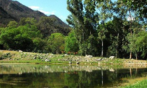 Casi ocho – hectáreas de áreas verdes, bosque – jardín, laguna artificial y pileta.