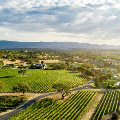 Visit our 40 acre estate vineyard, just south of Los Olivos, CA.