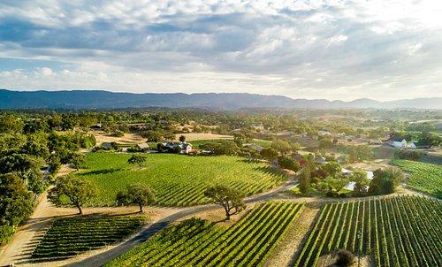Visit our 40 acre estate vineyard, just south of Los Olivos, CA.