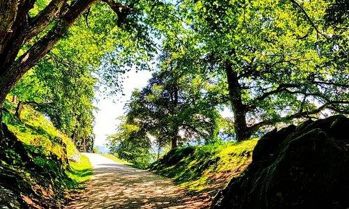 Sehr schöner Rundwanderweg durch den Tierpark Rosegg.