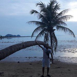 Hanging Palm Tree