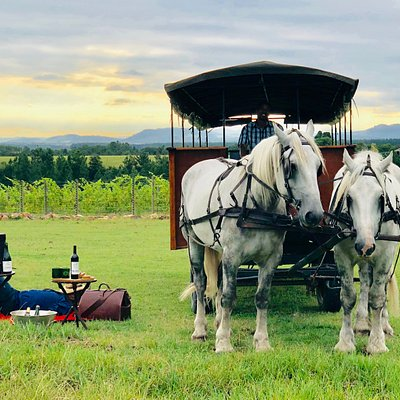 Enjoy a 30 minute, fun and informative wine tasting trail on the magnificent Kay and Monty Wine Estate.  Sparkling wine on arrival, tasting 2 wines plus snack platter on the carriage and including an informative vineyard stop.  Great activity for individuals or small groups up to 16 people.