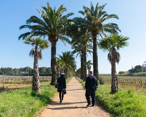 Balade dans les vignes à La Croix Valmer