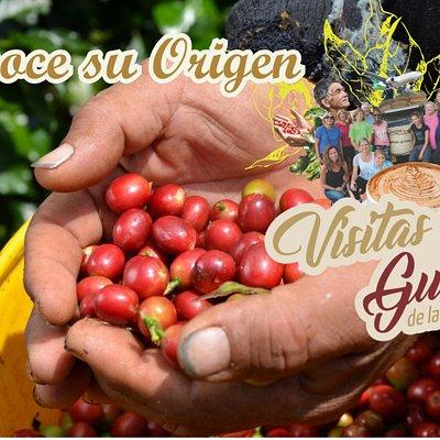 Ven y conoce el origen de café la Morelia