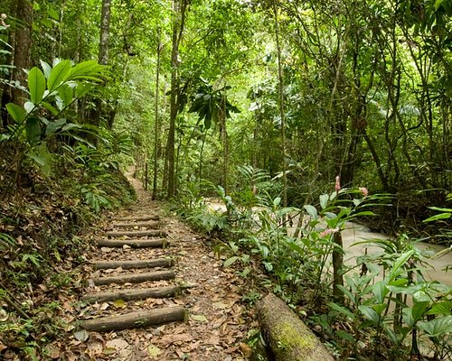 Hike through the rainforest to the riverhead and blue hole