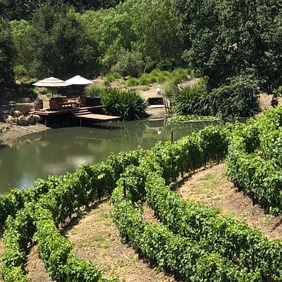 Private Vineyard and Pond