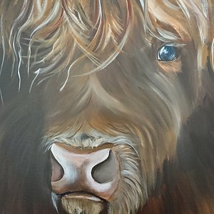 Highland cow's