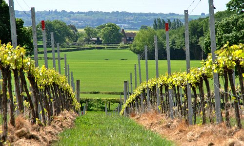 Spring in the vineyard - Free self-guided tour available all year round (Weekends 11am-5pm)
