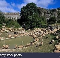 Avec les moutons