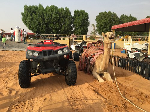 Explorer with Curiosity A Memorable Adventure for Family & Friends of All Ages.Desert Safari + Quad Biking + Camel Riding AED 210/- Per person