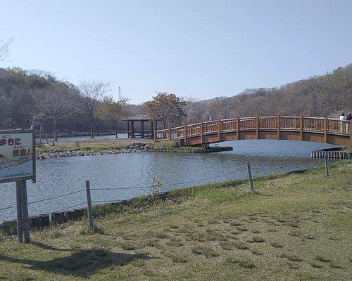苫小牧市緑ケ丘公園内にある金太郎の池と桜並木に行ってみました。ハイキング・ピクニックなど市民が多く訪れるなど憩いの場所になっている。園内には、鳥たちの憩いの場になっている金太郎の池があり、ボートにも乗ることが出来る。今回の目的地は「金太郎の池」。苫小牧市重機協組が15周年を記念して作った、一周2kmほどの人工池。広大な高丘森林公園とも隣接し、緑の豊富な場所でもあります。池の周囲をジョギングする人の姿も多く見かけます。緑ヶ丘公園の東側には、かつて「金太郎の沢」 と呼ばれる沢がありました。由来については、その昔、この沢の奥に「炭焼きの金太郎」と言う人が住んでいたからだと言う説がありますが、定かではありません。最後に、「金太郎池」と呼ぶらしいのですが、表示板では、「金太郎の池」となっています。どちらが正しいのかわかりません。動画はYouTubeでご覧下さい。https://www.youtube.com/watch?v=Y44DQGq_5Jw