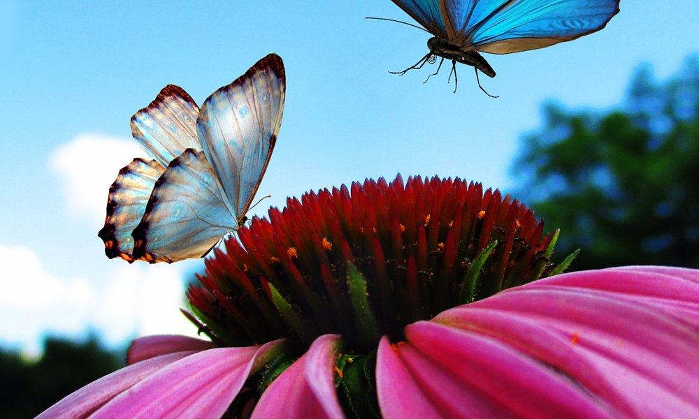 Пейзаж бабочек!