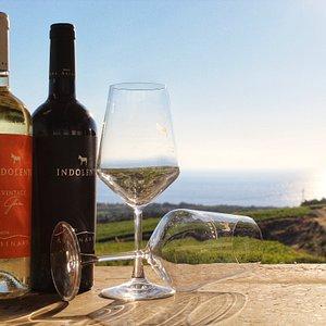 Degustazioni vini alle Tenuta Asinara | Sorso | Sardegna