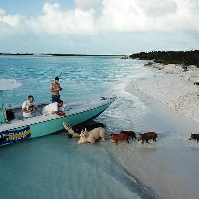 The best sea adventure tour on Long Island Bahamas  which includes swimming with pigs