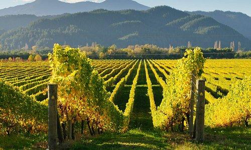 #Kakheti ,the cradle of Wine <3