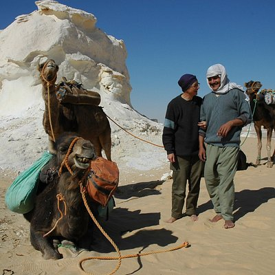 camels man safari