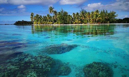 Jardin de corail à distance de la pension