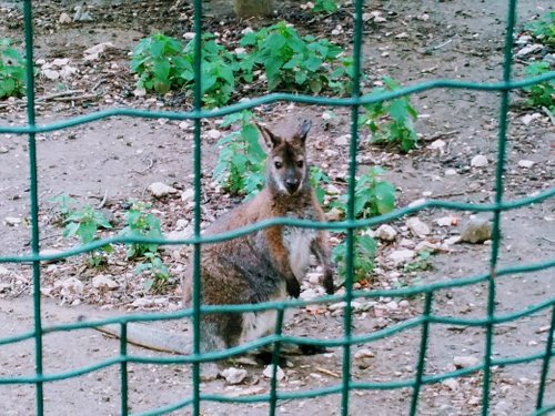 Chisinau Zoo