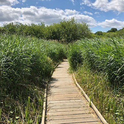 Boardwalk through the reeds