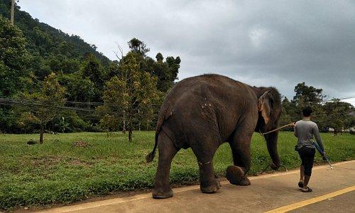 路上巧遇象伕與大象