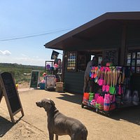 Regular visitor, Polly the dog, at Brancaster Beach Kiosk, Norfolk, UK