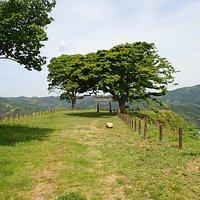 月山富田城築城以前から月山には山麓に里宮の勝日神社、山頂に奥宮の勝日高守神社がありました。